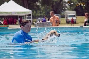 dog activites (1)